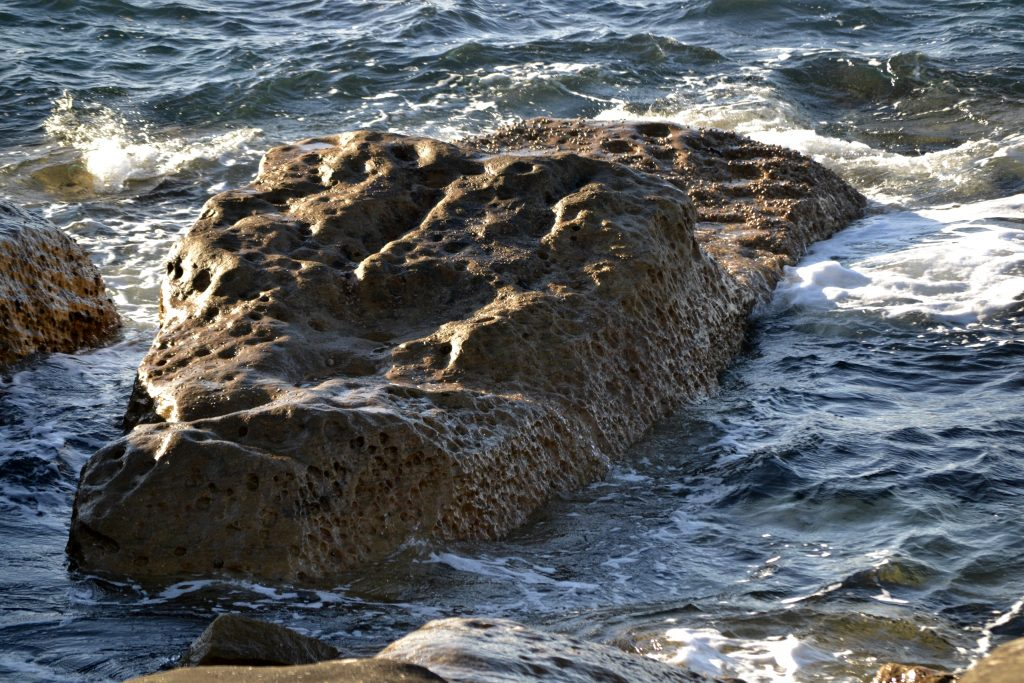 This rock looks like a crocodile